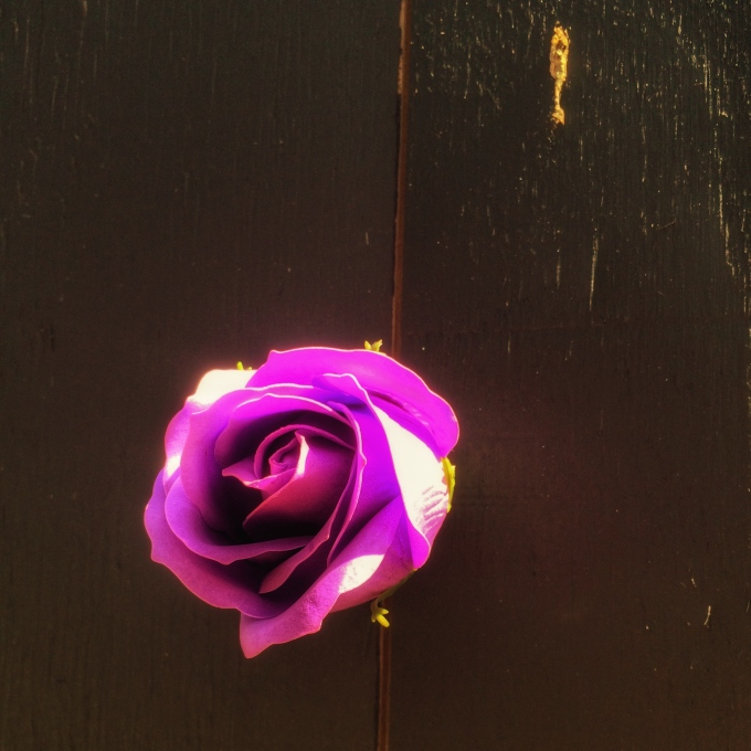 A Rose is aDot